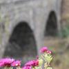 大分県の石橋