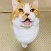 【猫学】猫飼いビギナーさん必見!キャットフードの選び方の超基本