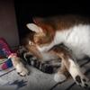 2月22日猫の日のコゲさん