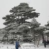 雪景色シリーズ(その6)「兼六園」