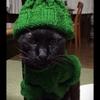 黒猫の冬支度