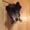 我が家の愛犬がついに逝ってしまった ( 涙 )