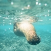 【ガラパゴス】野生のペンギンと泳ぎアシカと遊ぶ!サンティアゴ島