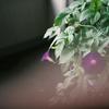 夏を切り取れ!情緒あふれるフィルムカメラのススメ【35mm】【Film】【ライカ】【CONTAX】