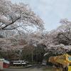 2020.03.30 カフェオリーブと真岡行屋川の桜