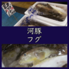 2月9日はフグ(河豚)の日!フグってどんな魚?刺身を実食。