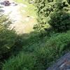 神社の草刈り 満開でした Mowing at the shrine
