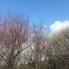 春(⌒▽⌒)