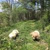 放牧気味の新緑ご近所わんこ散歩