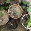 小さい鉢 竹札 Small flower pots