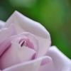 花びらに癒されて