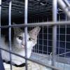 2012 5月 のら猫手術。
