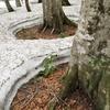 ◆'20/05/16   残雪と新緑の県立自然博物園へ①