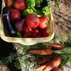 無農薬野菜今日の収穫@新潟EMBC複合発酵バイオで栽培する健康農産物