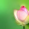 こころの癒しとリラックスのための瞑想会