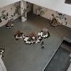 再開したMoMAで美術鑑賞と気分転換をしてきました