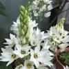 ボリューミーな花🌸