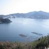 河津桜(山口県下松市笠戸島)4