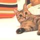 猫とコルクマット