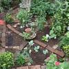 雨降る前の庭仕事・・・ポタジェ三つ