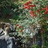 ライオンキングとクイーン・サバ