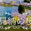 DJI Japan 見納め桜『どこかに...』