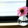 花を家に飾る♪エキナセアとランタナの今年の初もの♪