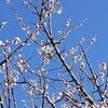 今日のマヤ暦 K227 青い手・白い風の6日目