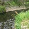 釣りガールの初フィッシュ(^^)d