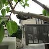 蝉、沖縄で独自の緊急事態宣言発令、断られるPCR検査、など