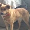 保護犬テレサ、笑吉、まつり&犬会員ななさん愛犬♡幸吉