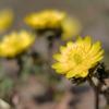 スプリング・エフェメラル ~ 春の短命な花たち
