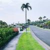 ハワイ島旅行記⑥ 【プルメリア】ハワイの植物&家の周り散策とディナー【エアビーの家で自炊】