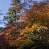 なんか、京都っぽい所に色々行った話  その3  嵯峨野の紅葉を眺めて帰る。
