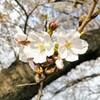 子供と穏やかに過ごす休日と春の花