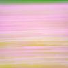 撮り忘れたコスモスの海:夢の平