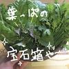 Ayatoの家庭菜園★葉っぱパラダイス~♪