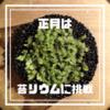 苔リウム・プロジェクト(KP)①【2020年正月は、100均ガラスボトルで苔リウムに挑戦する】