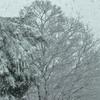 火曜日:雪かきで疲れきりました