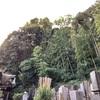 お不動様を腹ごもりした 定光寺裏山のカシの木(横浜市南区)