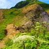 梅雨明け夏本番❗️…宝の山へ…