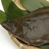 似ているけどこんなに違う魚、鮃(ヒラメ)と鰈(カレイ)。 白身魚を代表する両者の違いとは?