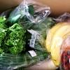 《らでぃっしゅぼーや》1ヵ月でどんな野菜が届くのか?