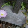 ひっそり咲いていた・・・