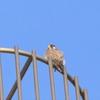 初冬の北印旛沼探鳥記