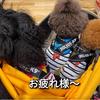 2021.7.2 【両親❗️ワンコとショッピング‼️】 Uno1ワンチャンネル宇野樹より