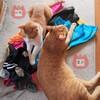 猫が人の言葉を理解してるって検証は困難極まるけど飼い主にはちゃんと分かってる