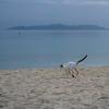 竹富島のねこさん