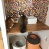 猫トイレのリニューアル①