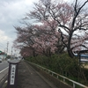 桜の🌸🌸が咲き始めました